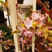 Цветочный интерьер в кафе :: татьяна