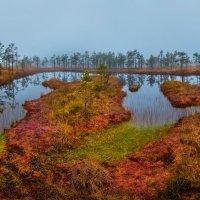 Яркие краски осеннего болота :: Фёдор. Лашков