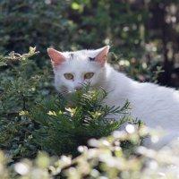 Дикий кот :: Ульяна Альбинская