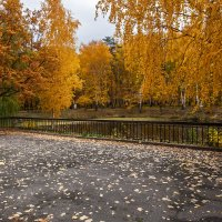 Осень в парке :: Владимир