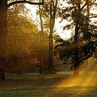 Потоки солнечного света :: Alexander Andronik