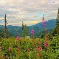 Ещё цветёт иван-чай :: Сергей Чиняев