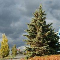 Яркая осень :: nika555nika Ирина