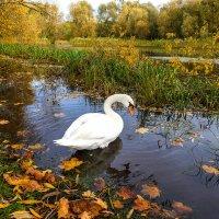 Осенняя грусть :: Леонид Соболев