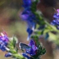 Найди бабочку :: Владимир Марков
