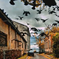 Птицы летят. :: Ирэна Мазакина