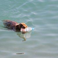 Люди....не бросайте в море мусор!!! :: ninell nikitina