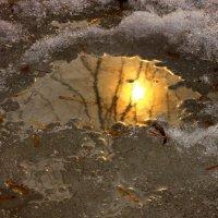 Солнечный блик :: олег свирский