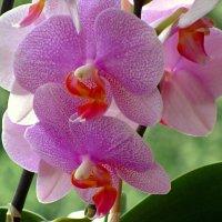 Экзотические цветы :: Сергей Карачин