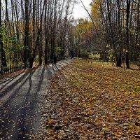 Осень в парке :: Михаил Рогожин