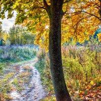 Осенние краски 1 :: Сергей Филатов