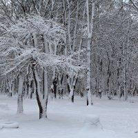 Зимние сны :: Наталья Кузнецова
