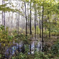 На болоте. :: Лариса (Phinikia) Двойникова