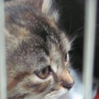 кошка :: Зинаида