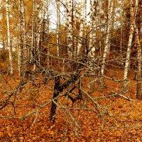 сбросившее листву :: Александр Прокудин