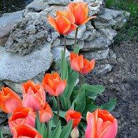 Тюльпаны :: svetlana.voskresenskaia