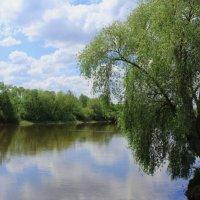 Над рекою ива :: Василь Веренич