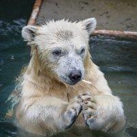 кто не любит эскимо :: cfysx