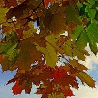 Осенний цвет :: Сергей Карачин