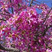 Бутылочное дерево :: Ефим Журбин