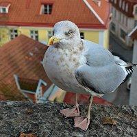 Милашка с модным педикюром :: Marina Pavlova