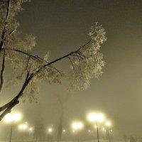 туман4 :: Дмитрий Потапов