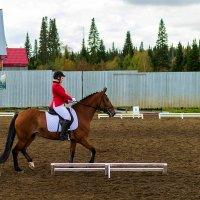 На конных скачках, репортаж :: Владимир Деньгуб
