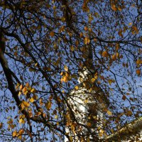 ... а просто осень... :: Александр Беляков