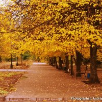 Осень в Кривом Роге :: Андрей Зелёный