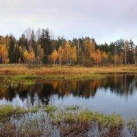 Осень отражается золотом в реке.. :: Павлова Татьяна Павлова