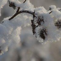 Снег :: Savayr