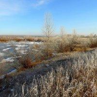 Первый иней,первые морозы. :: nadyasilyuk Вознюк