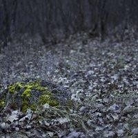 Краски поздней осени :: Дмитрий