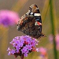 удовольствие и красота от природы :: Олег Лукьянов