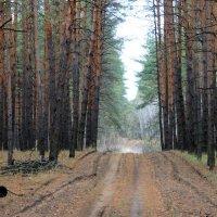 О чём шумит сосновый лес? :: Валентина ツ ღ✿ღ