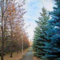 Осень :: Андрей Кузнецов
