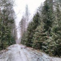 По первому снегу :: Николай Варламов