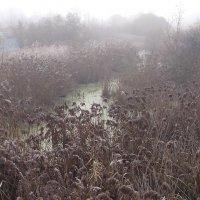 Проезжая   у  болота. :: Виталий Селиванов
