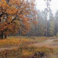 Грустя бесчувственной листвой... :: Лесо-Вед (Баранов)