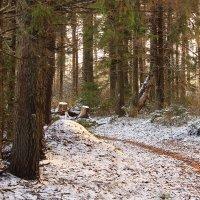 В ноябрьском лесу :: Татьяна Ломтева