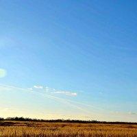 Солнечный день 8 ноября! :: Михаил Столяров