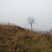 туман..одиночество.. :: Михаил Жуковский