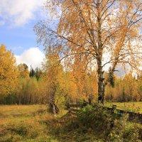 Осень в Перерве. Один из вариантов... :: Александр Широнин