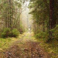Ноябрьский лес :: Aнна Зарубина