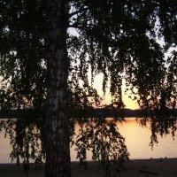 Закат, береза :: Анна Воробьева