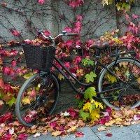 календарный лист или велосипедный портрет в октябре :: Grigory Spivak