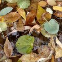 Осенние листья :: Нина Корешкова