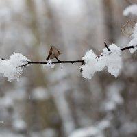 Снег в октябре :: Александр Синдерёв