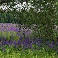 Цветочная поляна :: Владимир Максимов