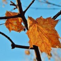 Осенние кленовые :: Валентина Пирогова